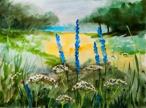 aquarelle-cerfeuil-lupins